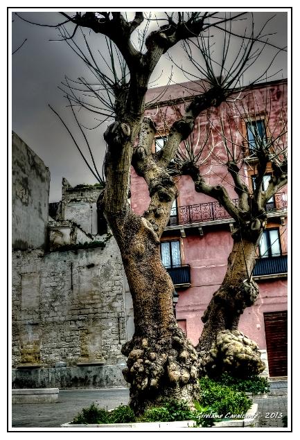 albero-contorto