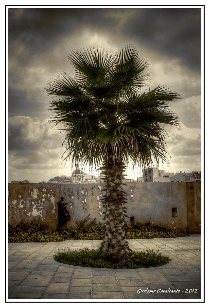 albero-e-cattedrale-jpeg