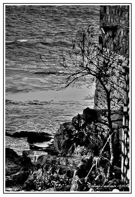 albero-mare