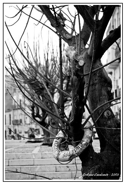 albero-salvagente