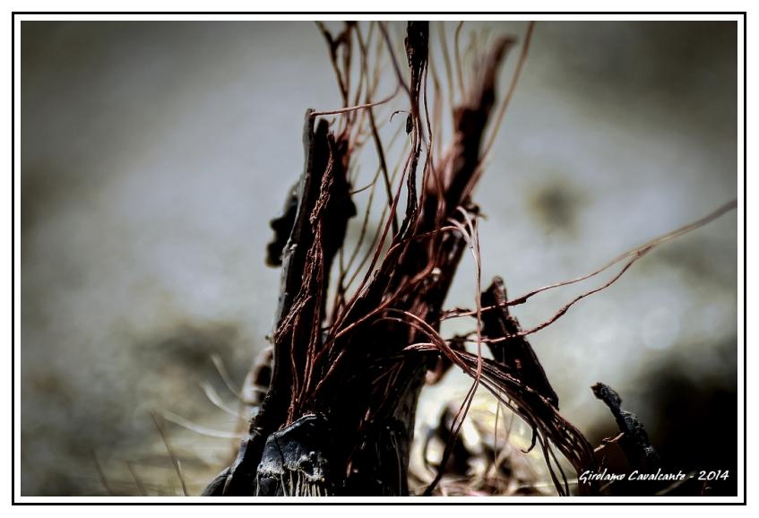arbusto-alga