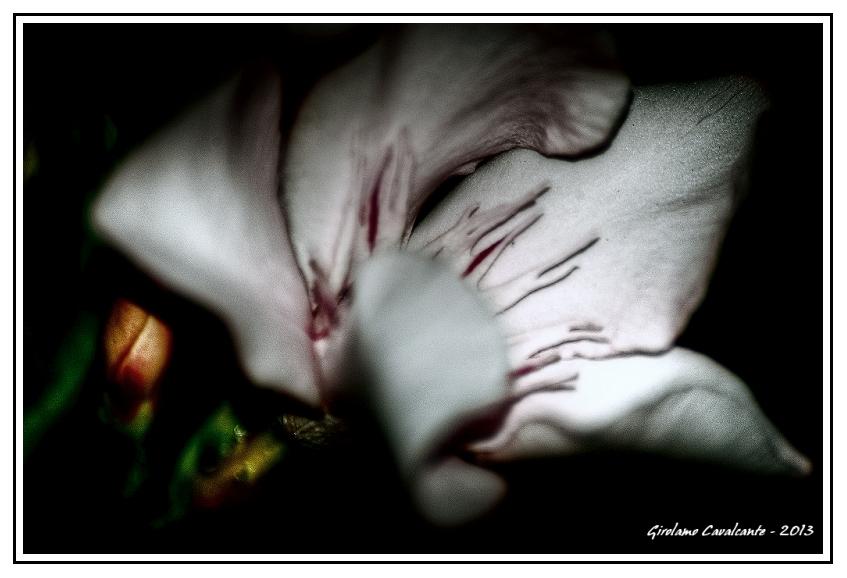 fiore-stil-jpeg