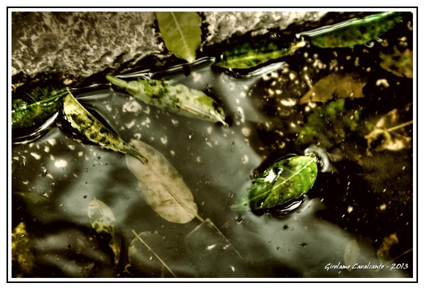 foglie-pozzanghera-jpeg