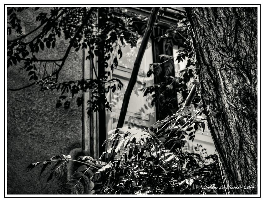 fronde-albero-Jpeg