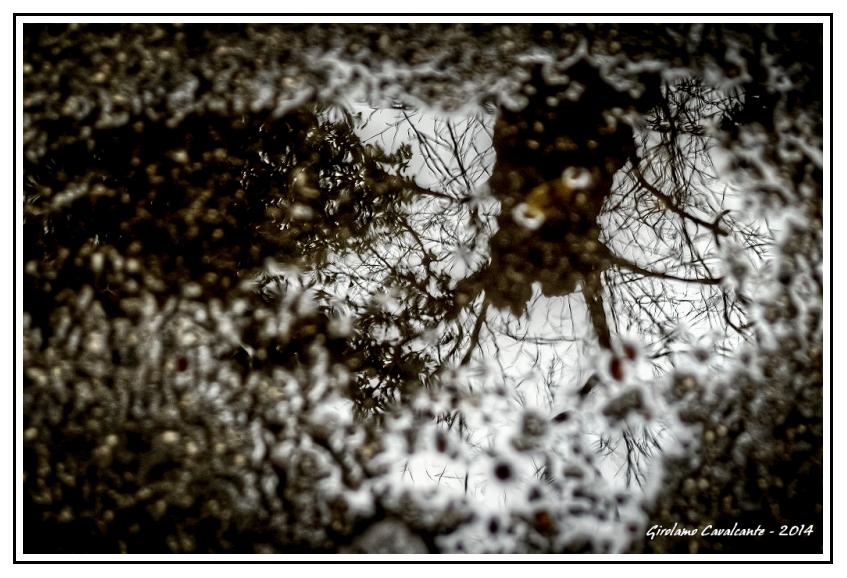 riflesso-albero-Pozzanghera-Jpeg