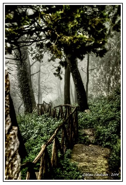 sentiero-erice-nebbia