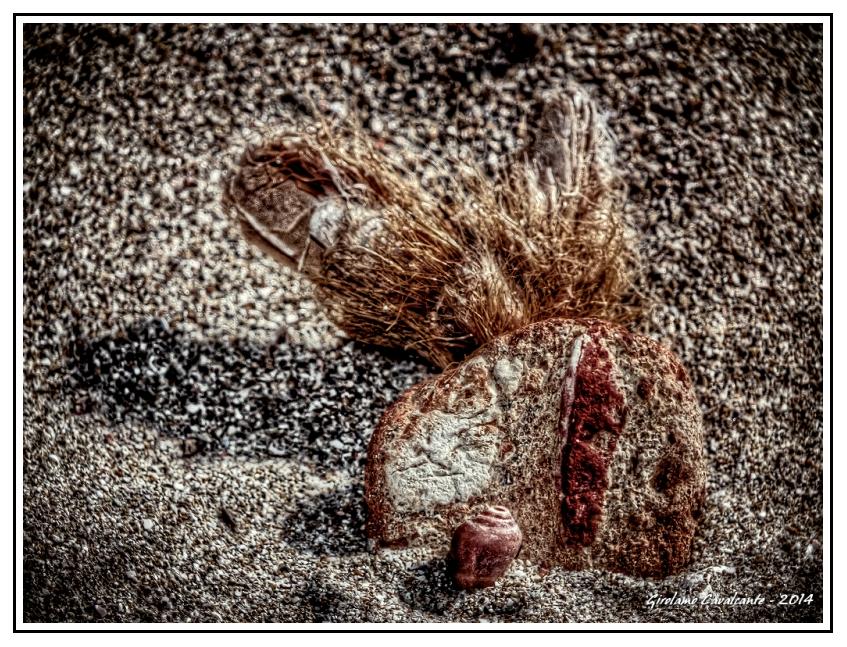 spiaggia-cespugli-Jpeg