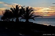 tramonto-palme