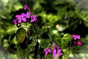 Fiore Pianta Jpeg