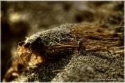 arbusto-secco-sabbia
