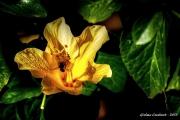 fiore ape Jpeg